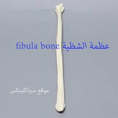 صورة تشريح عظمة الشظية fibula bone
