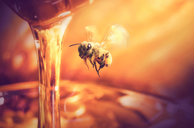 صورة أشهر وأهم طرق علاج الجيوب الأنفية بالعسل